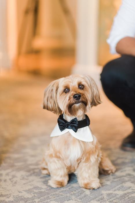 wedding dog